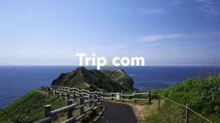 【札幌市内発】<プライベートツアー>美しい積丹ブルーの絶景スポット「神威岬」と旬のくだもの狩り食べ放題&特製味付けラム肉ジンギスカン♪【Trip.com公式ツアー】