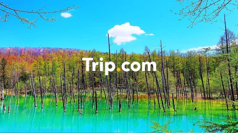 【札幌市内発】<プライベートツアー>秋の富良野&美瑛を満喫☆紅葉×コバルトブルーの共演「白金青い池」や秋の花々が咲き誇る「四季彩の丘」でゆったり散策♪森の中のログハウスが並ぶ「ニングルテラス」でお買い物も♪【Trip.com公式ツアー】
